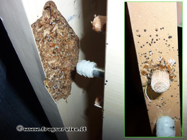 Come riconoscere un 39 infestazione da cimici dei letti cimex lectularius disinfestazione cimici - Punture di insetti nel letto ...