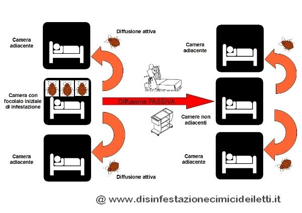 Diffusione passiva Cimex lectularius